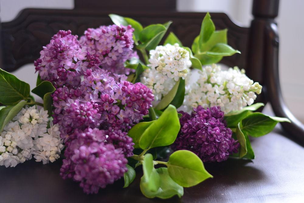 Большой букет сирени фото, цветов купить