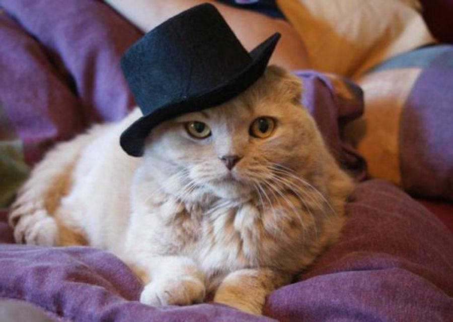 Картинки с котами одетыми
