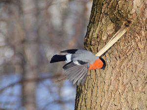 Весення фотоохота на птиц   Ярмарка Мастеров - ручная работа, handmade