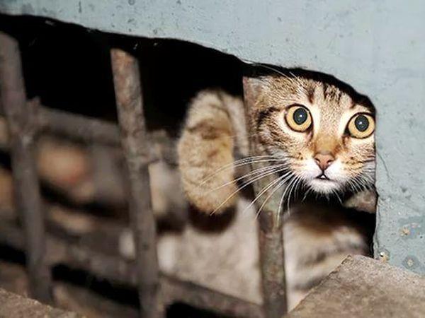 Коты всё понимают! | Ярмарка Мастеров - ручная работа, handmade
