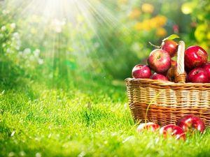 Килограмм красных яблок. Ярмарка Мастеров - ручная работа, handmade.