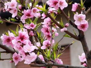 Сегодня Первыи День Весны!   Ярмарка Мастеров - ручная работа, handmade