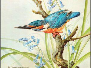 Птицы от английского живописца Basil Ede. Ярмарка Мастеров - ручная работа, handmade.