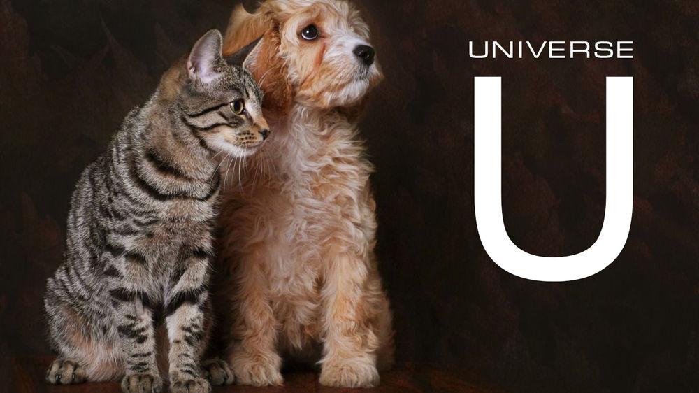 музыка в добрые руки, благотворительность, космические украшения, акции магазина, приятное с полезным, приют для животных