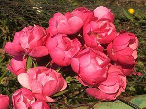 Россыпь тюльпанов, как миллион алых роз в индивидуальном заказе!. Ярмарка Мастеров - ручная работа, handmade.