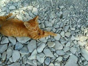 А вы знаете морских котиков???. Ярмарка Мастеров - ручная работа, handmade.