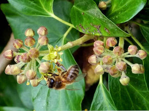 Немного нашей экзотики: плющевый мед). Ярмарка Мастеров - ручная работа, handmade.