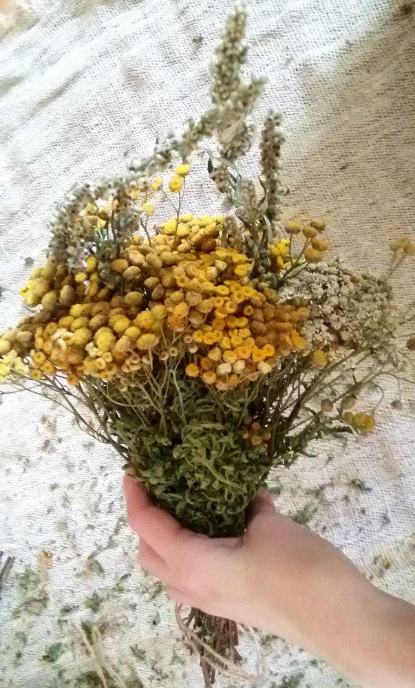 травы, сухоцветы, распродажа, колосья, ароматы лета, снижение цен