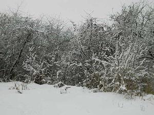 Про снегопад и кошку. Ярмарка Мастеров - ручная работа, handmade.