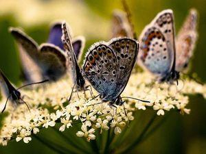 Аукцион с нуля! Бабочки!. Ярмарка Мастеров - ручная работа, handmade.