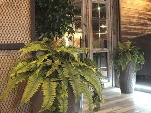 Цветы и растения в декоре ресторана. Ярмарка Мастеров - ручная работа, handmade.