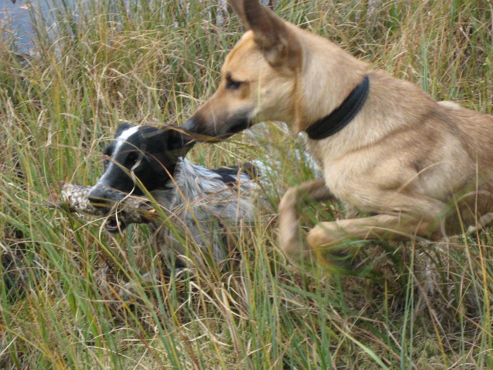 настоящий друг, бездомный пес, храброе сердце, дворняга лучший друг, люблю дворняжек, добрая история, персональная запись
