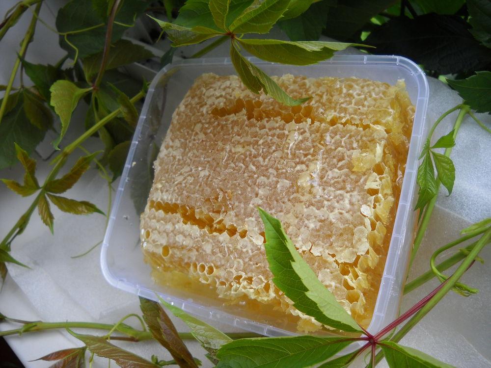 купить мёд в сотах, сотовый мёд купить