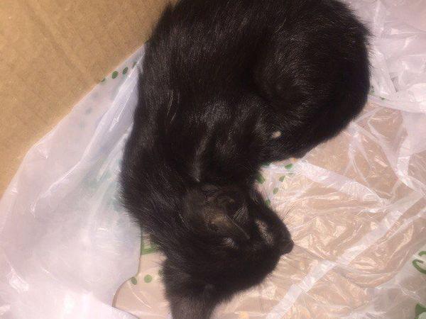 Нужна помощь котенку, найденному в пакете...Прошу репосты! | Ярмарка Мастеров - ручная работа, handmade