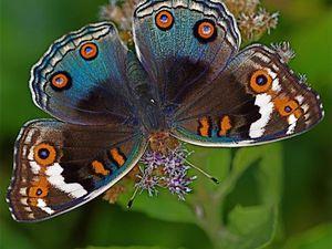 Подарок - символ: Бабочка. Дарите смысл! | Ярмарка Мастеров - ручная работа, handmade