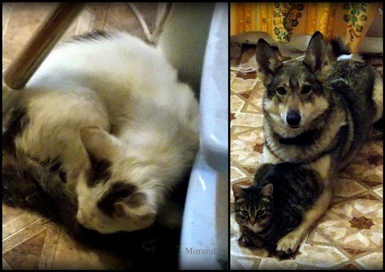 домашние животные, кошка, собака