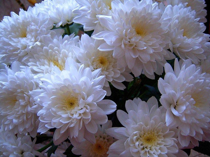 Что говорят цветы.....!!!!, фото № 13