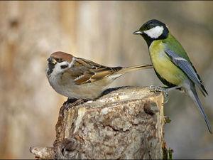 Про День птиц и про сову из Хогвартса | Ярмарка Мастеров - ручная работа, handmade
