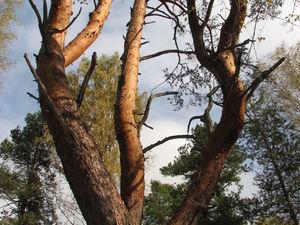 Чудо-дерево. Ярмарка Мастеров - ручная работа, handmade.