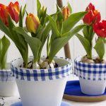 spring-flowers-new-ideas-tulip2-1.jpg