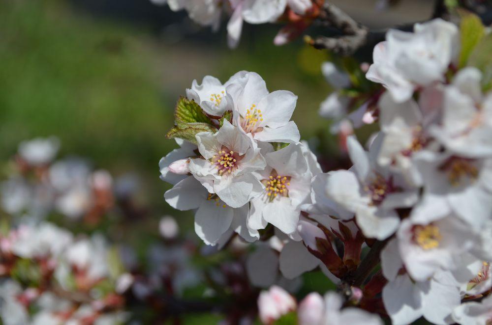 Наконец весна!, фото № 2