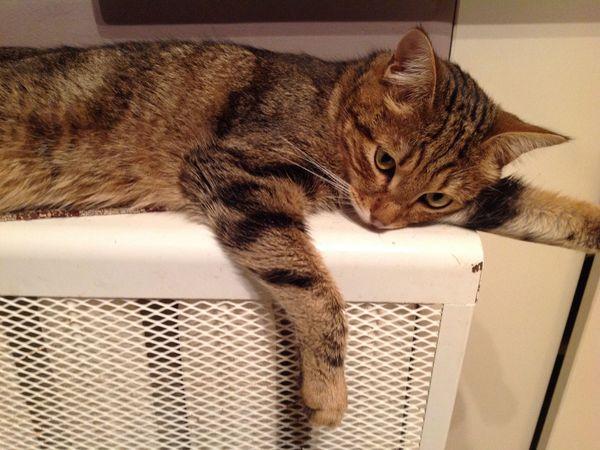 Рецидив у наших котов... | Ярмарка Мастеров - ручная работа, handmade
