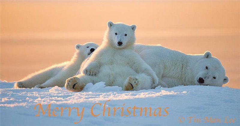 праздник, рождество, рождественский подарок, тедди