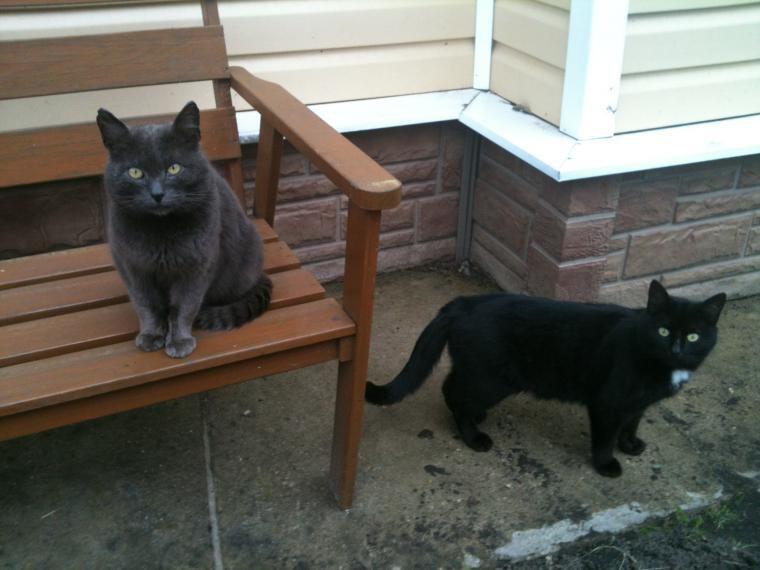 кот ищет дом, коту нужна помощь