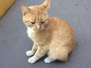Пристраиваем рыжего котика. Ярмарка Мастеров - ручная работа, handmade.