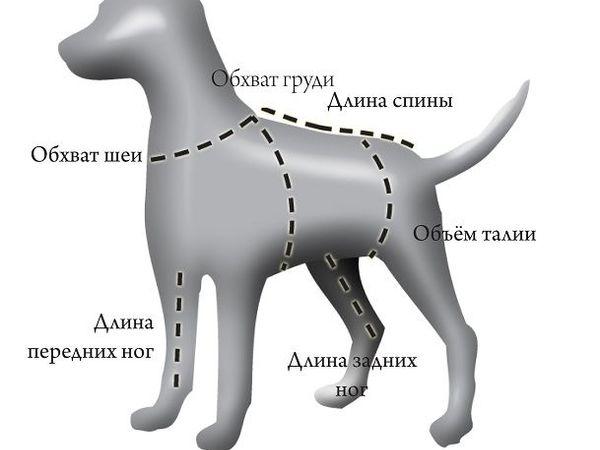 Как правильно снимать мерки с собаки | Ярмарка Мастеров - ручная работа, handmade