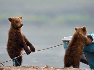 Прошу поддержать коллекции + смешные животные | Ярмарка Мастеров - ручная работа, handmade