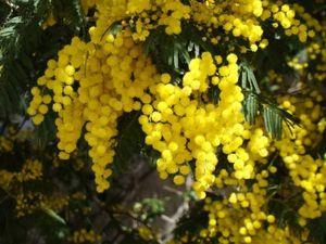 Подарок на 8 марта- приоткрываем тайны! Волшебные свойства цветов. Ярмарка Мастеров - ручная работа, handmade.