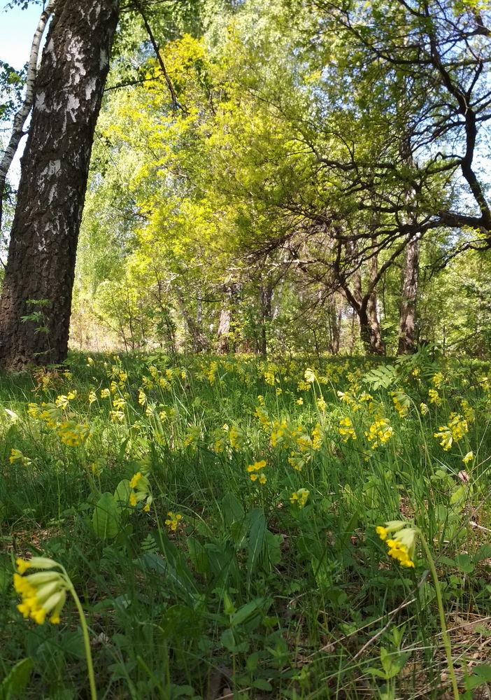 заготовка трав цветов, весна в лесу всё цветёт