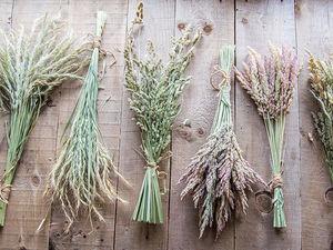 Сухоцветы | Ярмарка Мастеров - ручная работа, handmade