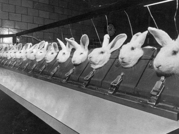 этичная косметика, защита прав животных, важный вопрос