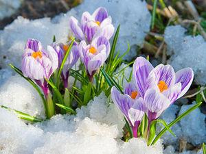 Девочки, с праздником Весны!. Ярмарка Мастеров - ручная работа, handmade.