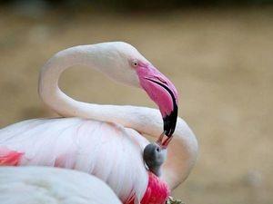 Розовый фламинго. Ярмарка Мастеров - ручная работа, handmade.