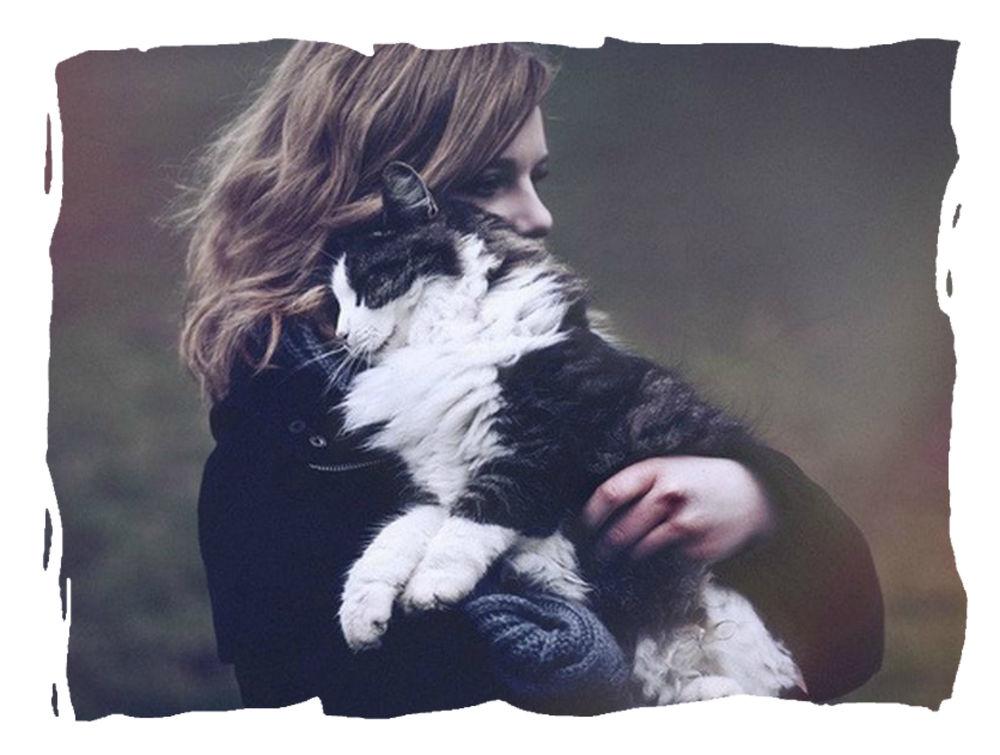 снижение цен, акционные цены, парфюмерные тотемы, парфюмерные обереги, выгодная покупка, акция, в пользу кошек, поможем кошеням, в пользу животных, поможем животным, распродажа, выходные низких цен