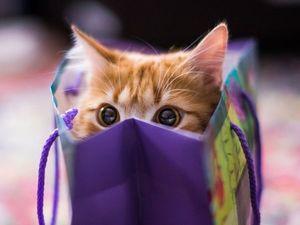 Предновогодний кот в мешке!. Ярмарка Мастеров - ручная работа, handmade.
