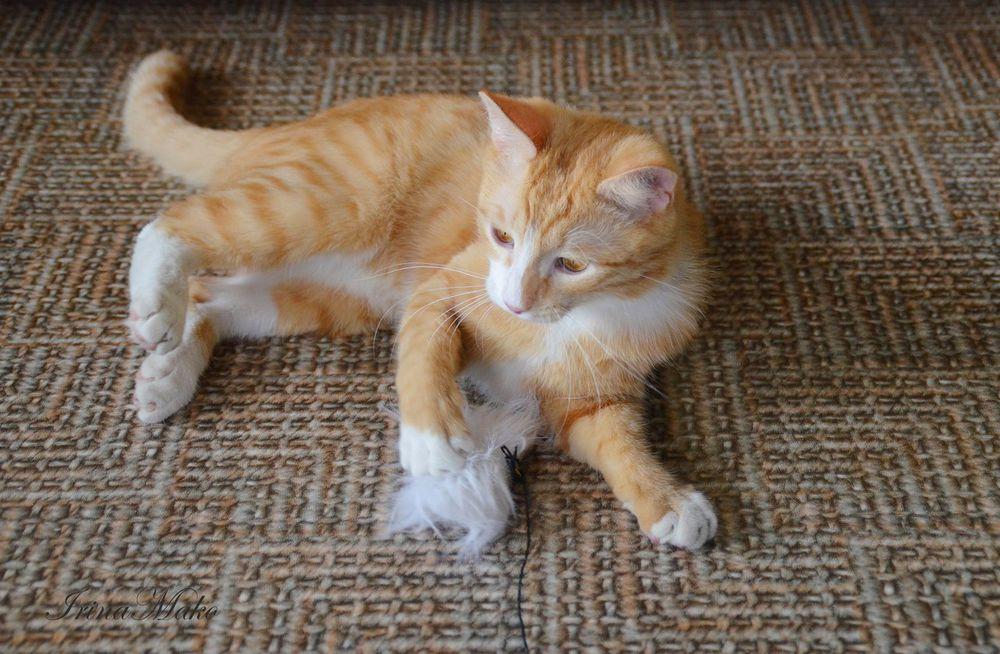 Котячьи поигрушки, фото № 8
