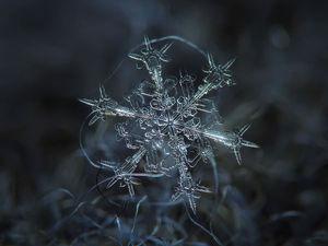 Тайная жизнь снежинки: удивительные макроснимки | Ярмарка Мастеров - ручная работа, handmade