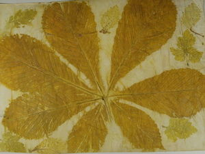 Как сделать принты растений на бумаге. Ярмарка Мастеров - ручная работа, handmade.