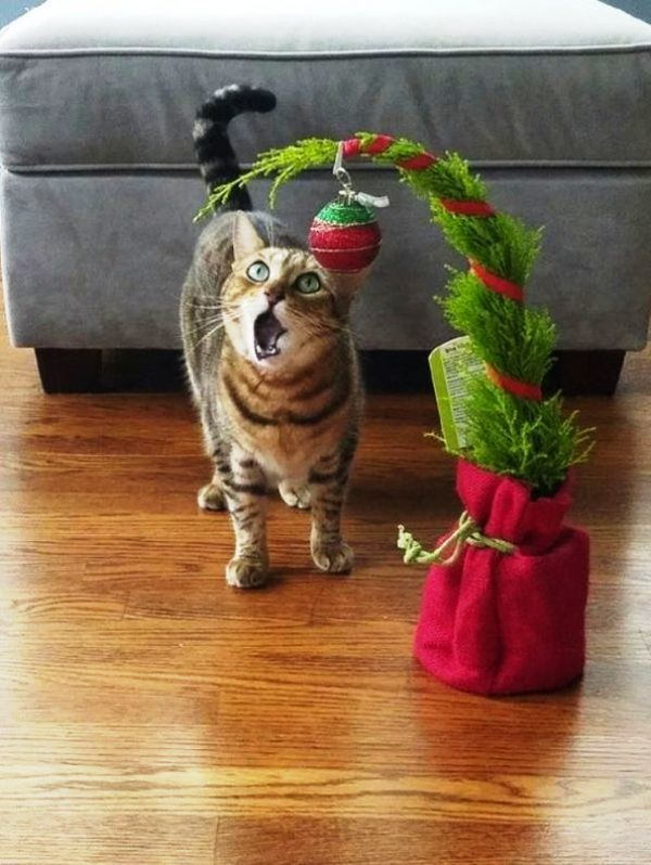 Christmas Cats! And a Little About the Safety of Pets During the Holidays, фото № 9