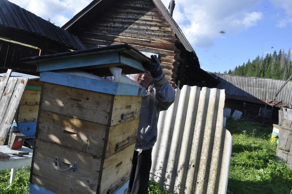 лето 2017, пчелы