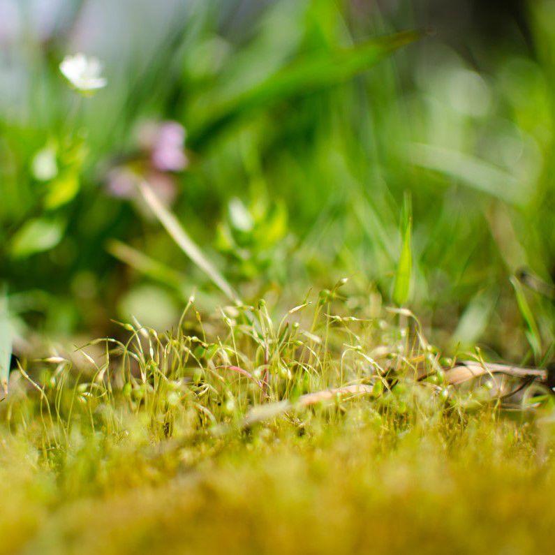 грибы в ароматерапии, грибная нота в парфюме, белый гриб, абабок, аромат леса, ароматерапевтические духи, натуральные духи