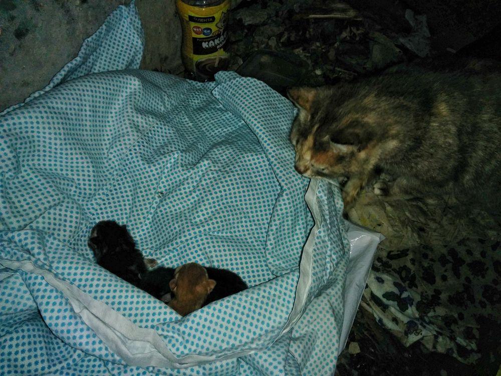 бездомные котята