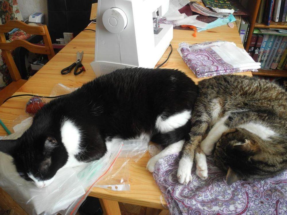 кот, коты, спящий кот, шитье, рукоделие, животные