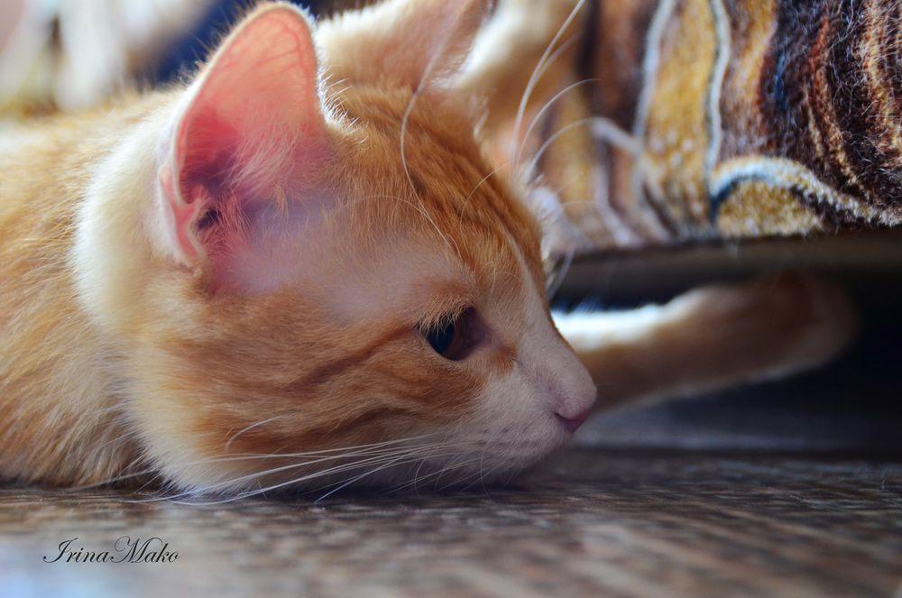 Котячьи поигрушки, фото № 12