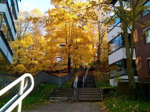 Финская Лаппеэнранта осенью. Ярмарка Мастеров - ручная работа, handmade.