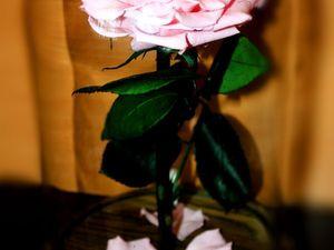 """Внимание!Платная лотерея!Разыгрывается """"Роза в колбе"""". Ярмарка Мастеров - ручная работа, handmade."""
